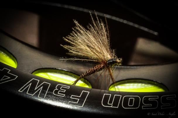 Suad Drkic - Angler / Fly Danielsson reel
